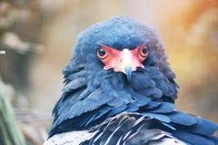 Ζογκλέρ αετών στοκ εικόνα με δικαίωμα ελεύθερης χρήσης