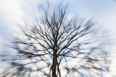 Ζουμ δέντρων Στοκ Εικόνες