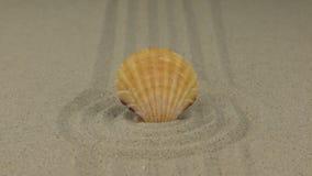 Ζουμ ενός όμορφου θαλασσινού κοχυλιού που βρίσκεται σε έναν κύκλο της άμμου απόθεμα βίντεο