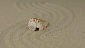 Ζουμ ενός όμορφου κοχυλιού θάλασσας που βρίσκεται σε ένα τρέκλισμα φιαγμένο από άμμο φιλμ μικρού μήκους