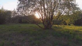 Ζουμ μέσα σε ένα μεγάλο δέντρο με μια πολύβλαστη κορώνα και ένα birdhouse, ηλιοβασίλεμα απόθεμα βίντεο