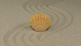 Ζουμ μέσα Όμορφο θαλασσινό κοχύλι που βρίσκεται στο τρέκλισμα άμμου απόθεμα βίντεο