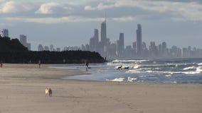 Ζουμ ξημερωμάτων μέσα, που εξετάζει ο Βορράς το Palm Beach, Gold Coast, Αυστραλία απόθεμα βίντεο