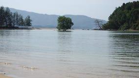 ζουμ στο δέντρο στη μέση του νερού απόθεμα βίντεο