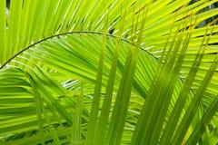 ζούγκλα ανασκόπησης Στοκ Φωτογραφίες