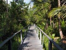 ζούγκλα γεφυρών Στοκ εικόνα με δικαίωμα ελεύθερης χρήσης
