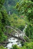 ζούγκλα γεφυρών στοκ φωτογραφίες