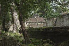 Ζούγκλα και δέντρα μέσα στο ναό του TA Prohm σε Angkor Στοκ εικόνα με δικαίωμα ελεύθερης χρήσης