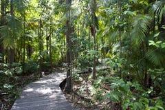 Ζούγκλα με το περπάτημα του μονοπατιού Στοκ Εικόνες