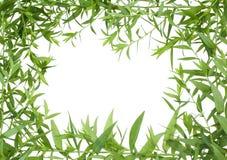 ζούγκλα πλαισίων Στοκ εικόνες με δικαίωμα ελεύθερης χρήσης