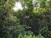 Ζούγκλα στοκ φωτογραφία με δικαίωμα ελεύθερης χρήσης