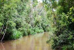Ζούγκλα του Μπόρνεο, τροπικό δάσος σε Tanjung που βάζει το εθνικό πάρκο Στοκ Εικόνες