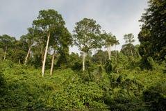 Ζούγκλα - τροπικό δάσος Στοκ εικόνες με δικαίωμα ελεύθερης χρήσης