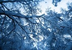 Ζούγκλα χειμερινού χιονιού στο υπόβαθρο της Μόσχας Στοκ φωτογραφία με δικαίωμα ελεύθερης χρήσης