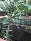 Ζούγκλα Montelimar στοκ φωτογραφίες