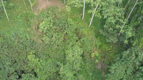 Ζούγκλες της Ινδονησίας πρεσών Πυροβολισμός από τον κηφήνα 4k εναέρια άποψη απόθεμα βίντεο