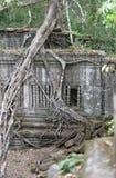 Ζούγκλα γύρω από το ναό Beng Mealea, Καμπότζη Στοκ εικόνες με δικαίωμα ελεύθερης χρήσης