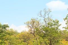 Ζούγκλα με τον ουρανό στοκ εικόνες