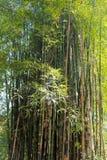 Ζούγκλα μπαμπού στην Ταϊλάνδη Στοκ φωτογραφία με δικαίωμα ελεύθερης χρήσης