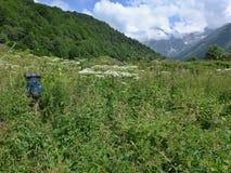 ζούγκλα που χάνεται στοκ φωτογραφίες με δικαίωμα ελεύθερης χρήσης
