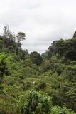Ζούγκλα σε Aberdare Κένυα Στοκ Εικόνα