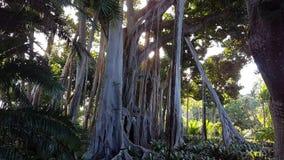 ζούγκλα στην υποδοχή Στοκ Εικόνες