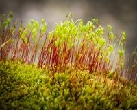 ζούγκλα στην υποδοχή Στοκ φωτογραφία με δικαίωμα ελεύθερης χρήσης