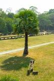 Ζούγκλα στο έδαφος κουτσού Angkor Wat Στοκ εικόνα με δικαίωμα ελεύθερης χρήσης