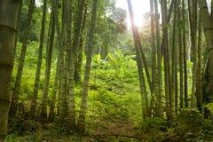 Ζούγκλα της Ταϊλάνδης Στοκ εικόνα με δικαίωμα ελεύθερης χρήσης