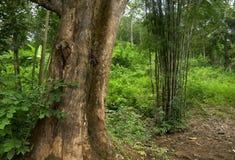 Ζούγκλα της Ταϊλάνδης Στοκ φωτογραφία με δικαίωμα ελεύθερης χρήσης