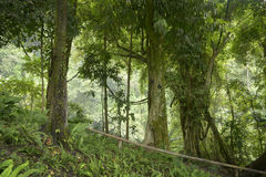 Ζούγκλα της Ταϊλάνδης Στοκ εικόνες με δικαίωμα ελεύθερης χρήσης