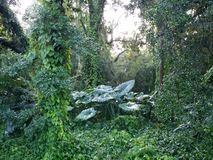 Ζούγκλα της Φλώριδας Στοκ Εικόνες