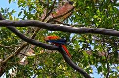 Ζούγκλα του Αμαζονίου Στοκ φωτογραφία με δικαίωμα ελεύθερης χρήσης