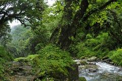 Ζούγκλα του Νεπάλ Στοκ εικόνες με δικαίωμα ελεύθερης χρήσης