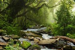 Ζούγκλα του Νεπάλ Στοκ φωτογραφία με δικαίωμα ελεύθερης χρήσης