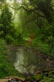 Ζούγκλα του Νεπάλ Στοκ Εικόνες