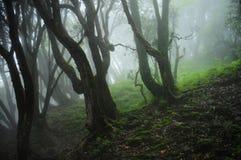 Ζούγκλα του Νεπάλ Στοκ εικόνα με δικαίωμα ελεύθερης χρήσης
