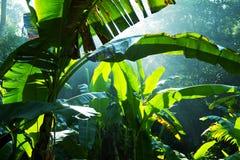 Ζούγκλα Στοκ εικόνα με δικαίωμα ελεύθερης χρήσης
