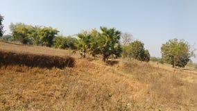 Ζούγκλα στοκ φωτογραφίες με δικαίωμα ελεύθερης χρήσης