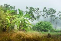 Ζούγκλες μπανανών Στοκ φωτογραφία με δικαίωμα ελεύθερης χρήσης