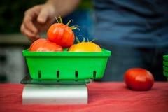 Ζυγίζοντας ντομάτες στην αγορά στοκ εικόνες