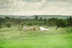 ζωή αγροτική Στοκ εικόνες με δικαίωμα ελεύθερης χρήσης