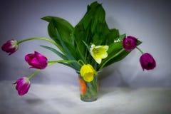 1 ζωή ακόμα Βάζο των τουλιπών λουλουδιών που στέκονται στον πίνακα στον πόνο το υπόβαθρο Μια μακροχρόνια έκθεση Στοκ Εικόνες