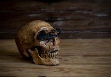 1 ζωή ακόμα Κρανίο που στηρίζεται στο παλαιό ξύλινο πάτωμα μπροστά από ένα scorp Στοκ Εικόνες