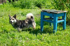 ζωή γατακιών αγελάδων χωρών γατών Λίγο κατοικίδιο ζώο Ουκρανία στοκ φωτογραφίες με δικαίωμα ελεύθερης χρήσης