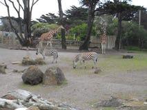 Ζωή ζωολογικών κήπων στοκ εικόνες