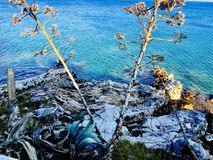 Ζωή θάλασσας και οι φυσαλίδες Στοκ Φωτογραφία