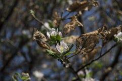 Ζωή και θάνατος φύσης betwin Στοκ φωτογραφία με δικαίωμα ελεύθερης χρήσης