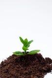 ζωή κηπουρικής έννοιας νέα στοκ εικόνες με δικαίωμα ελεύθερης χρήσης