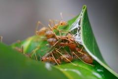 Ζωή μυρμηγκιών στοκ εικόνα με δικαίωμα ελεύθερης χρήσης